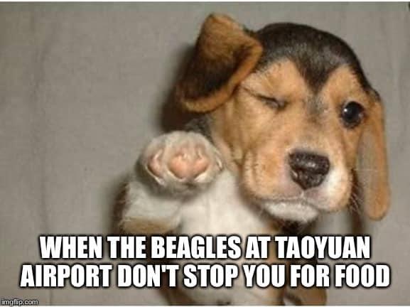 Taoyuan beagles