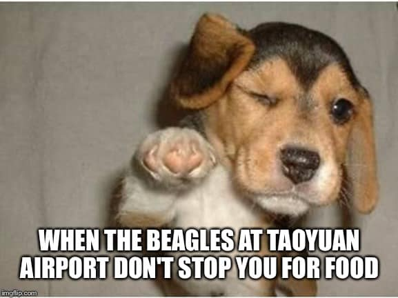 Taoyuan beagles